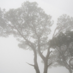 In a Fog-Weather Related Idioms